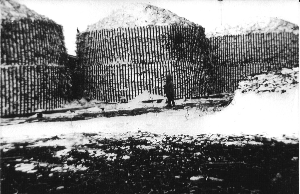 Corn cribbed using snow fencing.  Date is  but about 1950.
